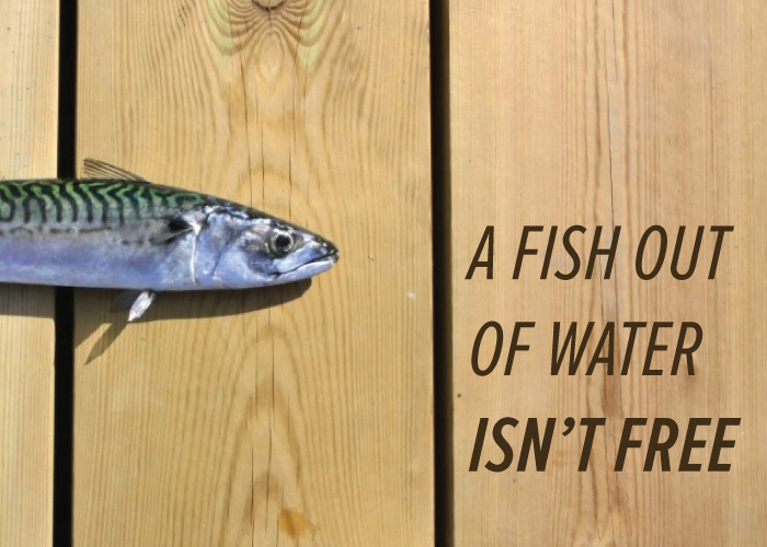 A FISH OUT OF WATER ISN'T FREE